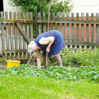 To avaoid back pain when gardening, try not to bend over alot.  It's much better to kneel down. The House Clinics, Bristol